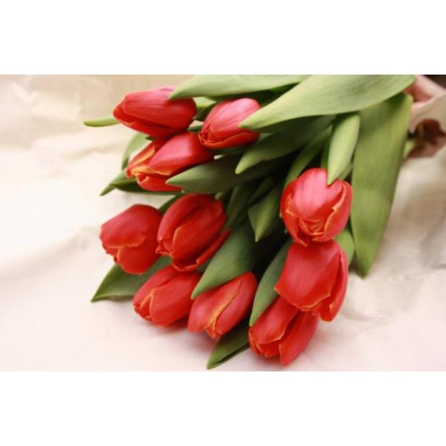 Поздравляем с наступающим Международным Женским Днем 8 марта!