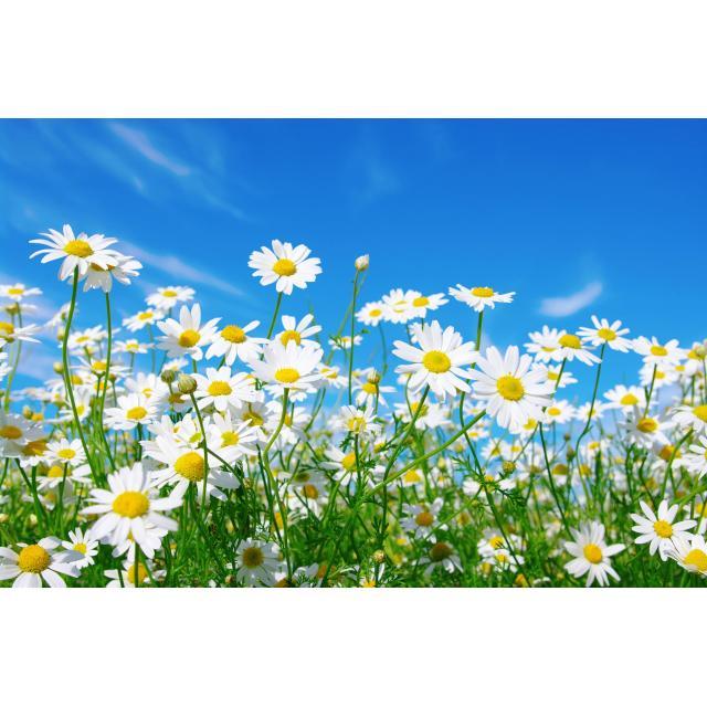 5 июня - Всемирный день охраны окружающей среды и День эколога!