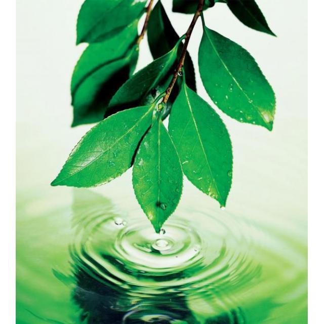 Об утверждении критериев отнесения объектов, оказывающих негативное воздействие на окружающую среду, к I, II, III и IV категории